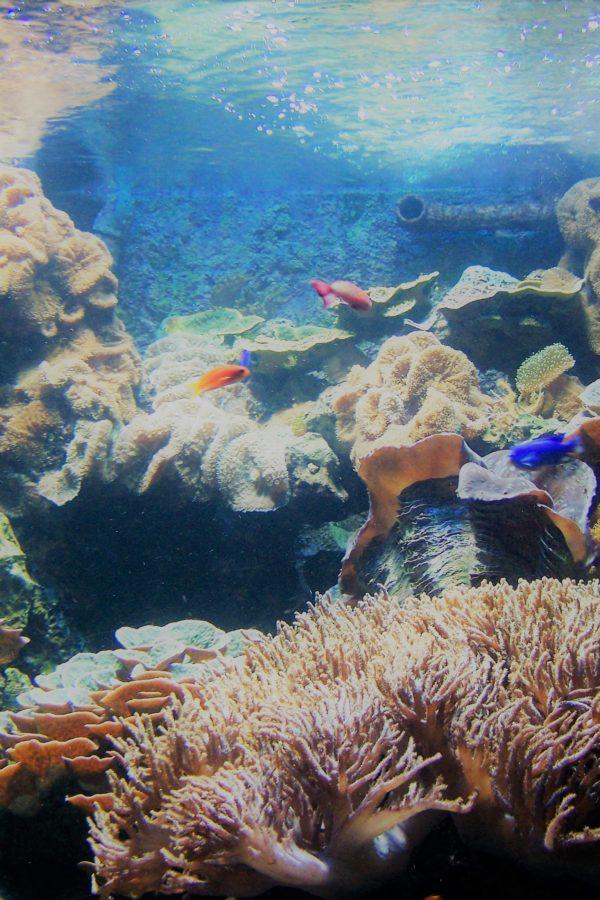Das adjektivarme Aquarium